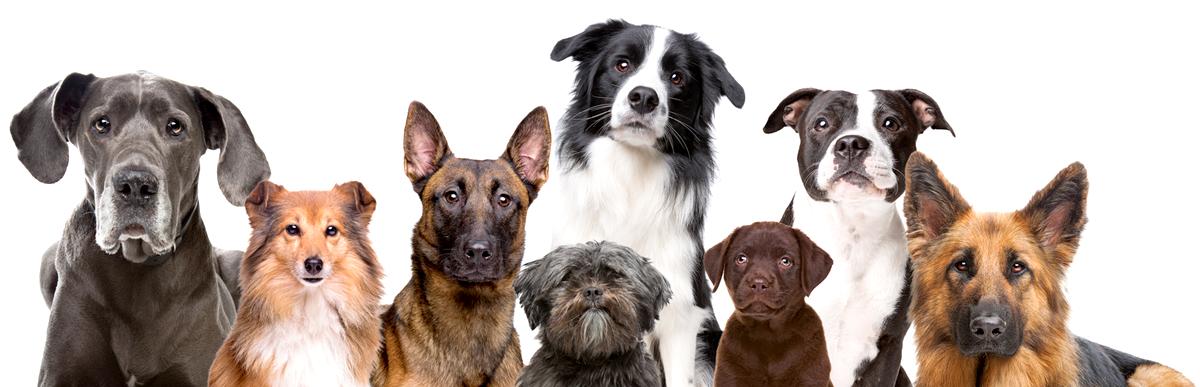 dog-groups-img-2